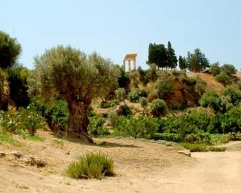 Agrigento: Il giardino della Kolymbetra