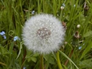 """La primavera è in arrivo, in aumento le """"doppie allergie"""""""