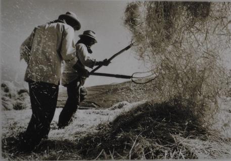 Mostre: il grano in Sicilia, storia antica di sofferenza