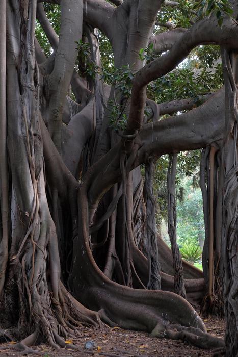 Mostre: all'Orto Botanico di Palermo torna La Zagara